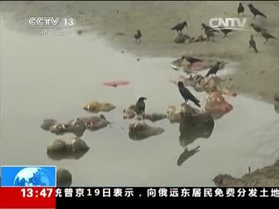 """[视频]印度:""""圣河""""受污 千米长卷""""诉怨"""" 恒河惊现浮尸 警方称或来自""""水葬"""""""