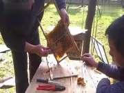 01_蜜蜂养殖技术_中华蜜蜂养殖_蜜蜂养殖_