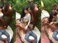 美女与猩猩合影遭强吻