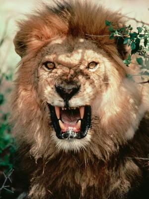 狂野动物园-狂野丛林