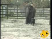 米卡成长天地-宝宝版 第2集-可爱的动物-动物亲子乐园