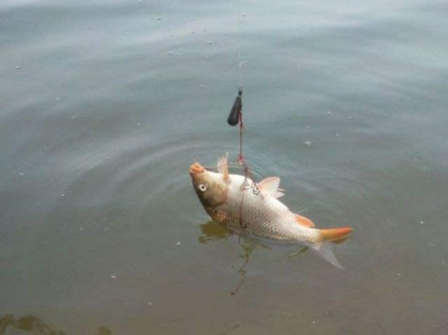 如何用海竿浮钓,图解浮漂组装!