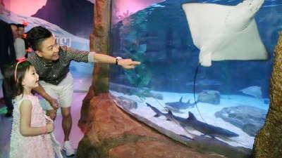 奥莉公主装逛海洋馆 见鲨鱼嘟嘴卖萌