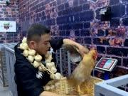 张烁捉鸡令人捉急 抚摸鸡头为她下套 - 我们战斗吧花絮20160714