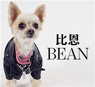 狗狗竟成了时尚网红