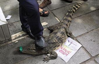 公司招聘出奇葩广告 现场亲鳄鱼奖千元?