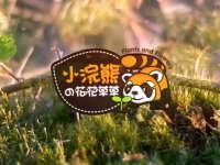 小浣熊的花花草草   还原植物微景观