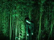 森林全景视频(The Forest - 360 Experience)