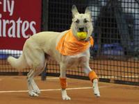 神奇动物在这里 盘点那些网球场上的不速之客