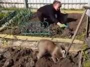 一只帮主人种土豆的熊宝宝,很努力很认真的样子