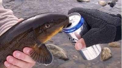 要想鱼上岸就拿粮食换  盘点吃惊奇葩饵shi赢了