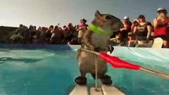 小松鼠参加世界极限运动大赛
