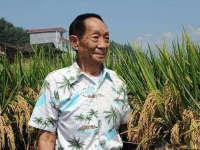 袁隆平团队重度盐碱地种稻亩产548公斤