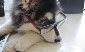狗大夫运营主管高元亨接受乐视宠物专访