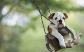 乐视宠物独家专访狗狗去哪儿APP
