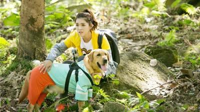 《神犬小七第二季》五只小七找找找