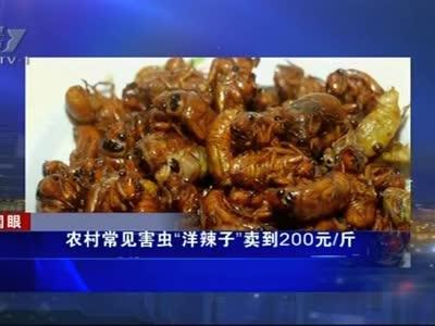 """[视频]农村常见害虫""""洋辣子""""卖到200元斤"""