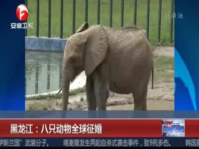[视频]黑龙江:八只动物全球征婚