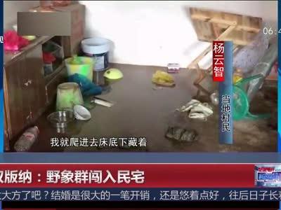 [视频]西双版纳:野象群闯入民宅