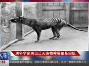 澳科学家测出已灭绝物种袋狼基因组
