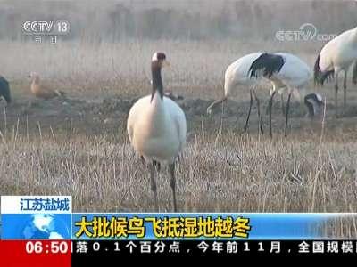 [视频]江苏盐城 大批候鸟飞抵湿地越冬