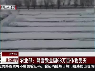 [视频]农业部:降雪致全国68万亩作物受灾