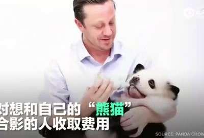 [视频]主人给松狮犬染色扮大熊猫 与其照相要收费