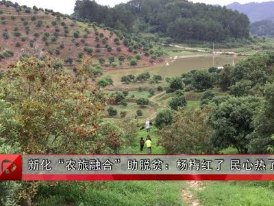 """新化""""农旅融合""""助脱贫:杨梅红了 民心热了"""