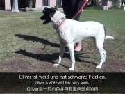 轻松学德语系列之狗狗