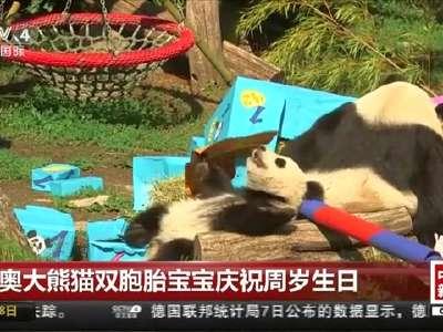 [视频]旅奥大熊猫双胞胎宝宝庆祝周岁生日