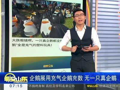 [视频]企鹅展用充气企鹅充数 无一只真企鹅