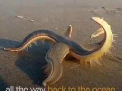 [视频]原来海星是这样走路的 还是头一回看到
