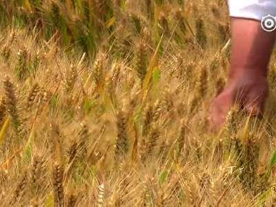 [视频]十九大代表风采录——茹振钢