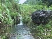 《广西故事》第58集:神秘的地苏地下河