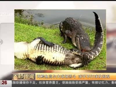 [视频]两鳄鱼高尔夫球场恶斗 球手不打球改围观