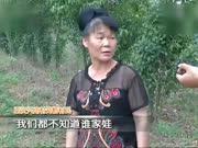 六岁女童田地遭遇多条恶犬围攻身亡