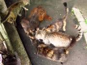 看到有人带吃的来 成群的流浪猫立马围了上来!