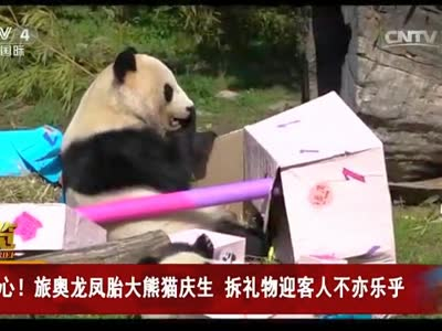 [视频]开心!旅奥龙凤胎大熊猫庆生 拆礼物迎客人不亦乐乎