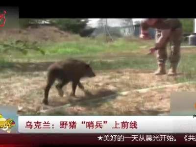 """[视频]乌克兰:野猪""""哨兵""""上前线"""