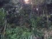 太阳穿过树林散发余光
