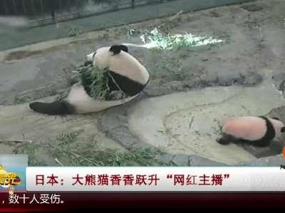 """[视频]大熊猫香香跃升""""网红主播"""""""
