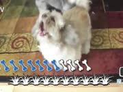 【魔力TV】8个动物界灵魂歌手