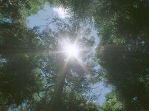 《德布西森林》电影原声带