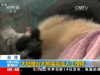 [视频]大陆赠台大熊猫完成人工授精