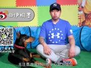 幼犬社会化(上)