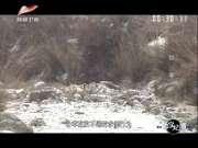 《真实纪录》20170413:中国珍稀物种之岩羊