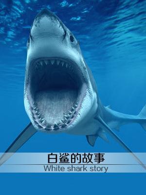 白鲨的故事