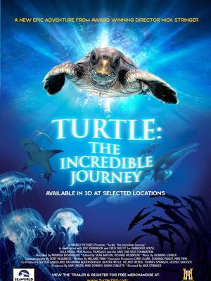 海龟奇妙之旅