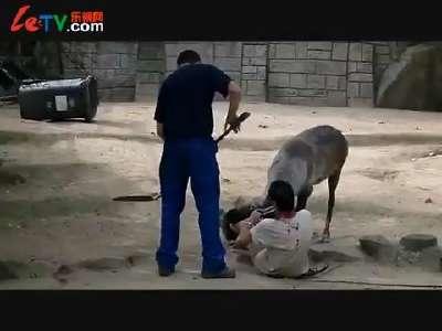 动物园上演人鹿大战_百度影视
