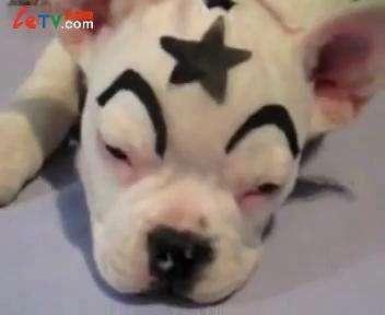 拥有小新可爱眉毛的狗狗